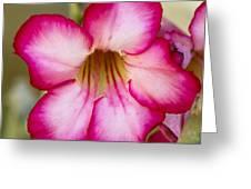 Delicate Desert Rose Greeting Card