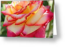 Delicate Edges Greeting Card