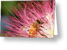 Delicate Embrace - Bee And Mimosa Greeting Card