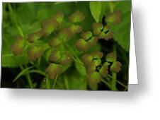 Delicate Green Greeting Card
