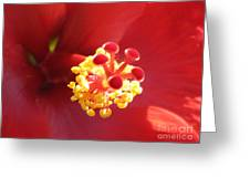 Delicate Hibiscus Greeting Card