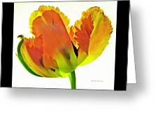 Delicate Inferno  Greeting Card