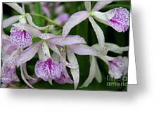 Delicate Orchid Blossoms Greeting Card