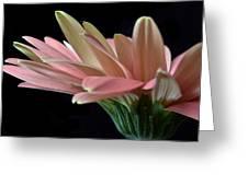 Delicate Petals. Greeting Card