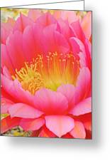 Delicate Pink Cactus Flower Greeting Card