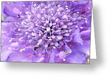Delicate Purple Greeting Card