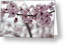 Delicate Spring Greeting Card