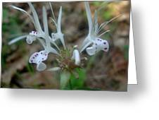 Delicate Wildflower Greeting Card