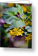 Delicate Yellow Flowers Greeting Card