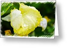 Delicate Yellow Wildflower Greeting Card
