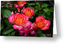 Delicious Summer Roses Greeting Card