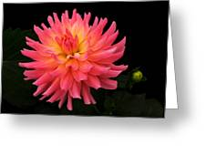 Delightful Dali Greeting Card