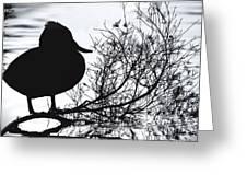 Delightful Duck Greeting Card