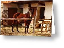 Delightful Horse Greeting Card