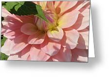 Delightful Smile Dahlia Flower Greeting Card