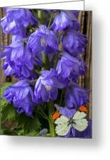 Delphinium And Butterfly Greeting Card