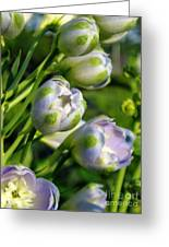 Delphinium Buds Blooming Greeting Card