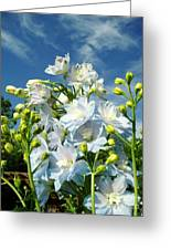Delphinium Sky Original Greeting Card
