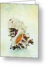 Delphinula Sea Shell Greeting Card