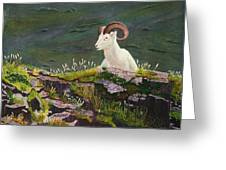 Denali Dall Sheep Greeting Card