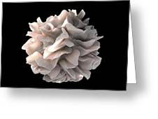 Dendritic Cell, Sem Greeting Card by Science Photo Library