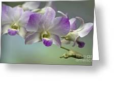 Dendrobium  6398 Greeting Card