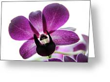 Dendrobium I Greeting Card