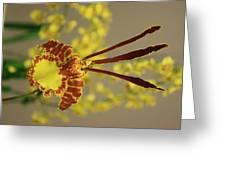 Dendrobium Greeting Card
