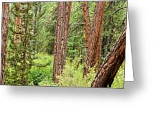 Dense Forest View Greeting Card