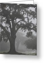 Dense Morning Fog In Oaks Greeting Card