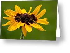 Denver Daisy Greeting Card