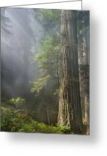 Depth Of Forest Greeting Card