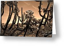 Desert At Dusk Greeting Card