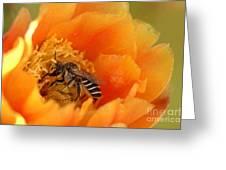 Desert Bee Greeting Card