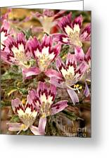 Desert Calico Wildflowers Greeting Card