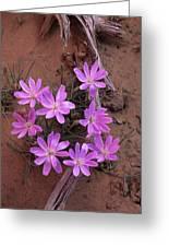Desert Chicory Rafinesquia Neomexicana Greeting Card