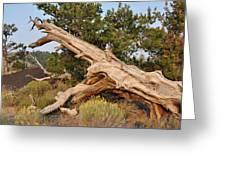 Desert Creation Greeting Card