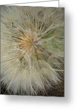 Desert Dandelion 2 Greeting Card