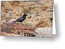 Jet Black Desert Dweller Greeting Card
