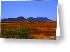 Desert Field Greeting Card by Rebecca Christine Cardenas