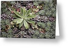 Desert Flora Greeting Card