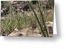 Desert Forest Greeting Card