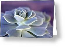 Desert Glow Greeting Card