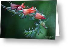 Desert Grace - Echeveria Greeting Card