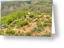 Desert Greenery Greeting Card