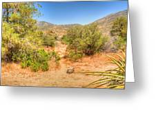 Desert Hardscape Greeting Card