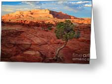 Desert Juniper Greeting Card by Inge Johnsson