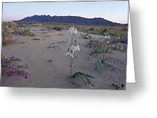 Desert Lily Sancturay Greeting Card