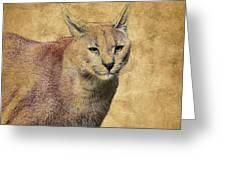 Desert Lynx Greeting Card