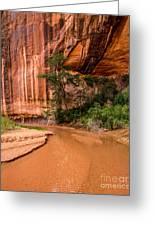 Desert Oasis - Coyote Gulch - Utah Greeting Card